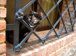 Toledo cat