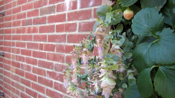 I came out of this visit wanting vertical gardens of my own more than ever. This one featured oregano and strawberries.