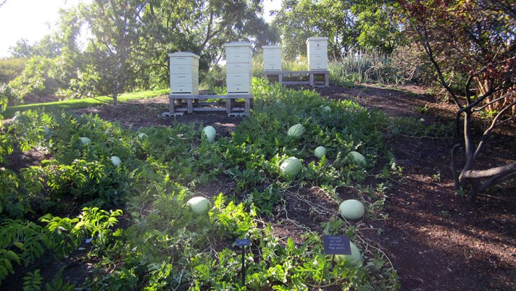 Bees! And melons! So many of both!